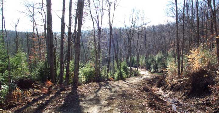 La MRC des Laurentides dépose de nouveau un mémoire dans le cadre du plan d'aménagement forestier